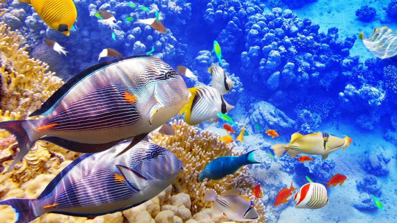 loài cá có rất nhiều trên đại dương