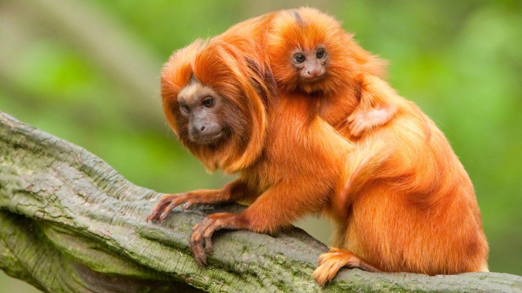 có bao nhiêu loài động vật sống ở amazon
